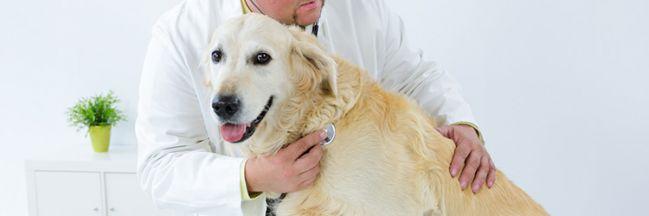 Assurances animaux : 4 questions avant de souscrire