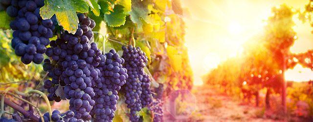Investissement viticole
