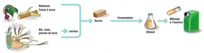 Processus de fabrication du bioéthanol