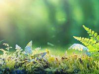 Loi Climat et résilience