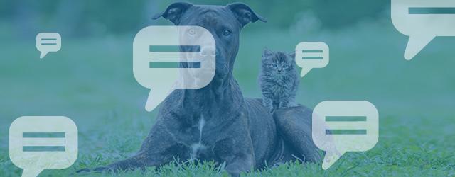 L'assurance animaux couvre-t-elles les dégâts matériels causés par mon animal?