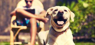 assurances animaux